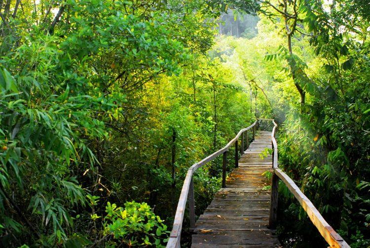 Vườn quốc gia Cát Tiên - Nam Cát Tiên, Tân Phú, Đồng Nai